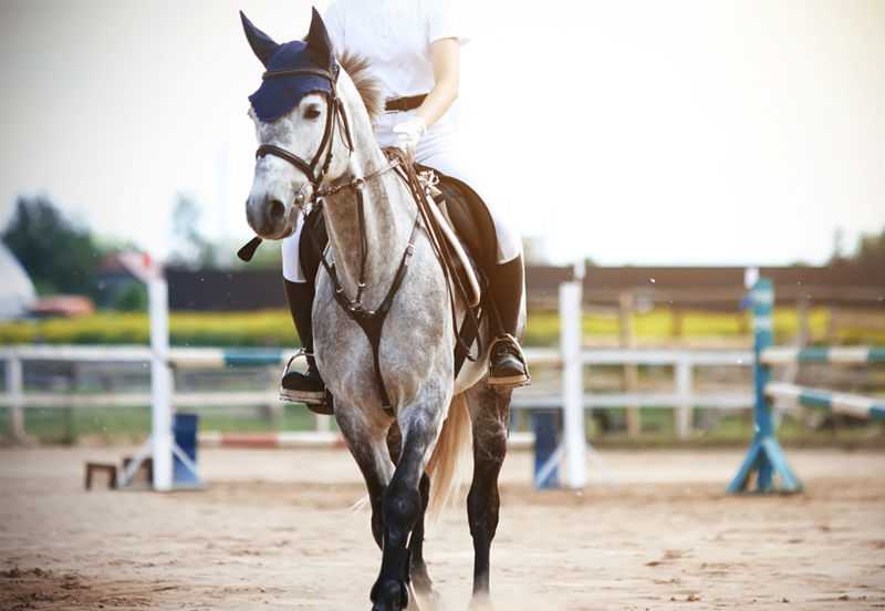 The top 5 things to think about when buying a horse
