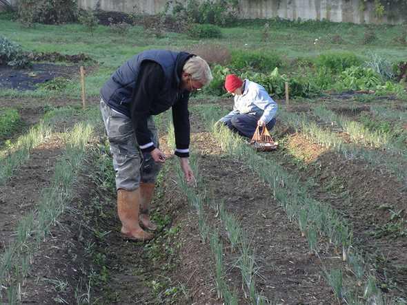 Condividere la fatica del lavoro agricolo