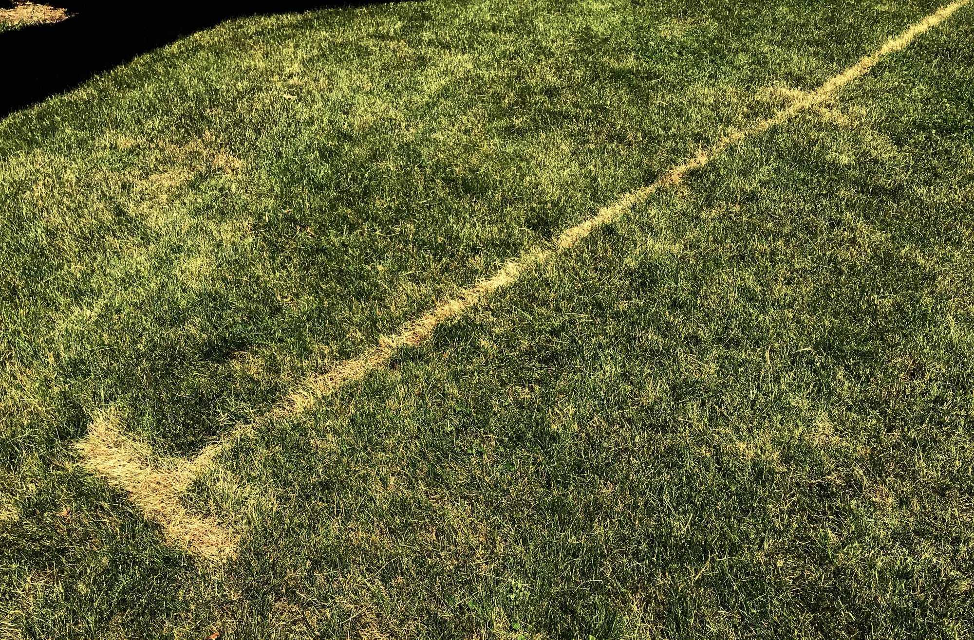 Dead Grass Under Weave Poles
