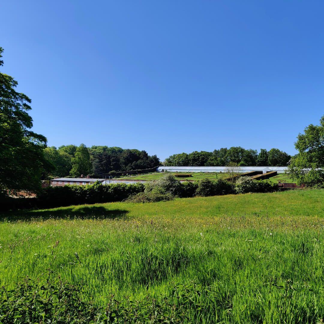 Temple Newsam fields