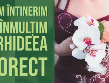 Cum inmultim orhideele, o metodă minunată fără pasta de citochinină