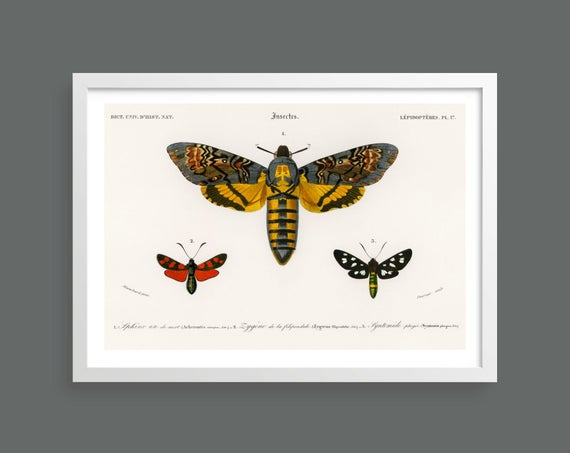 Butterflies and moths vintage illustration