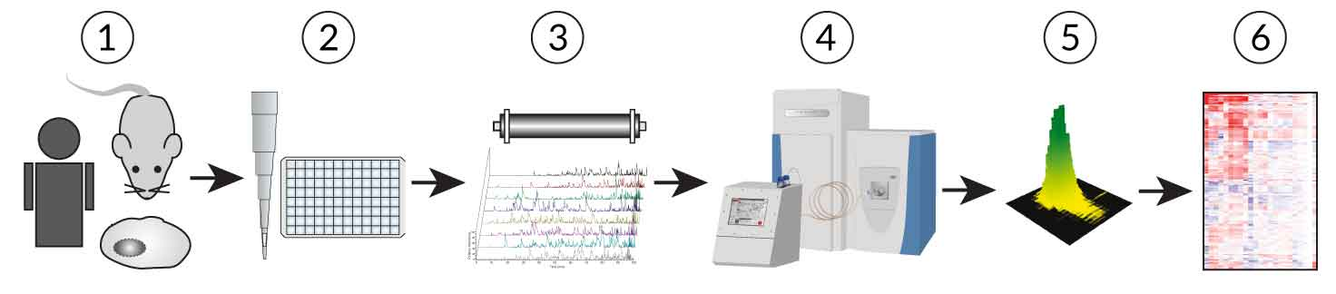 Figure of the mass spectrometry workflow
