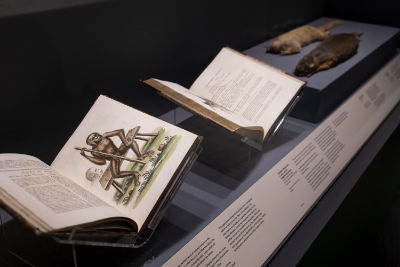 A book shows a full page colour illustration of a monkey holding a pole and sitting on a bench. Other items featured are a book and 2 taxidermized small animals mounted horizontally.