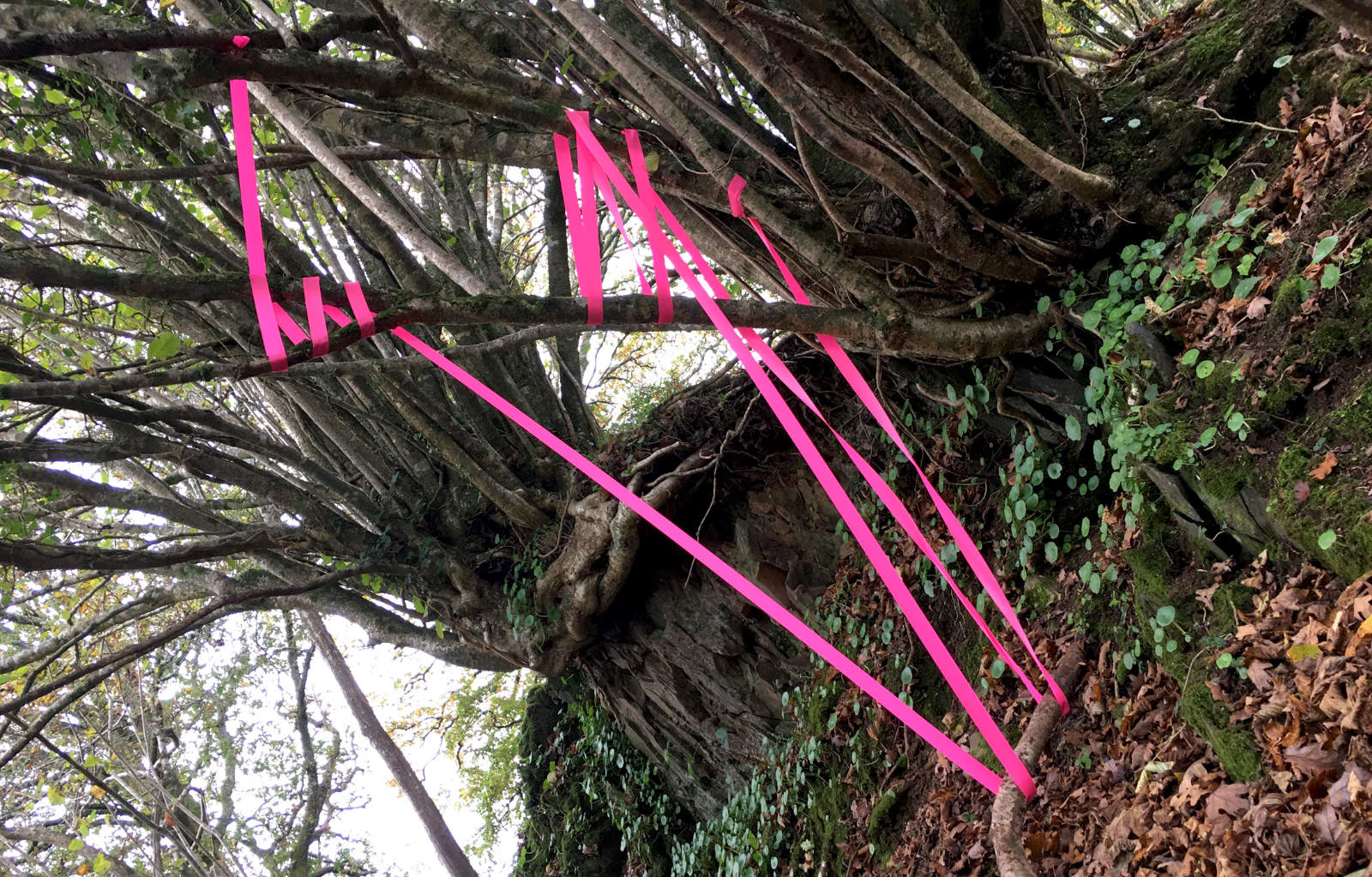 installations tape-in-woods-2
