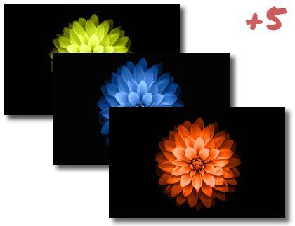 iPhone 6 Plus Lotus theme pack