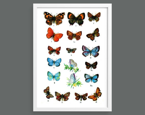 Botanical butterfly poster 4