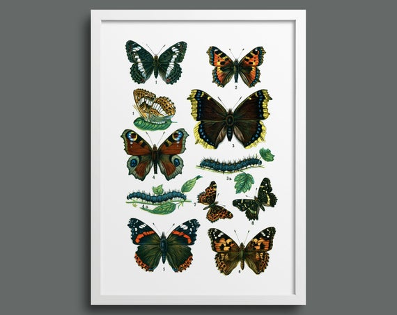 Botanical butterfly poster 3