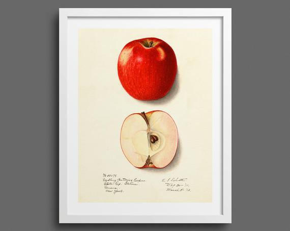 Red Apple Detail