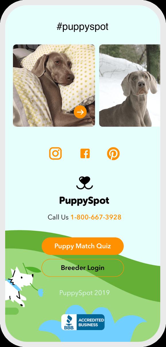 Hashtag puppy