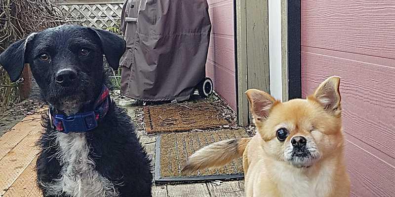 Jazzy and Dashwood (dogs)