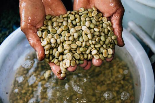 A hand holding wet beans