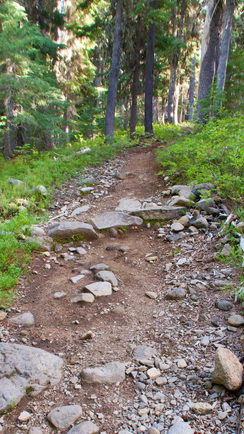 A rocky section of climbing trail