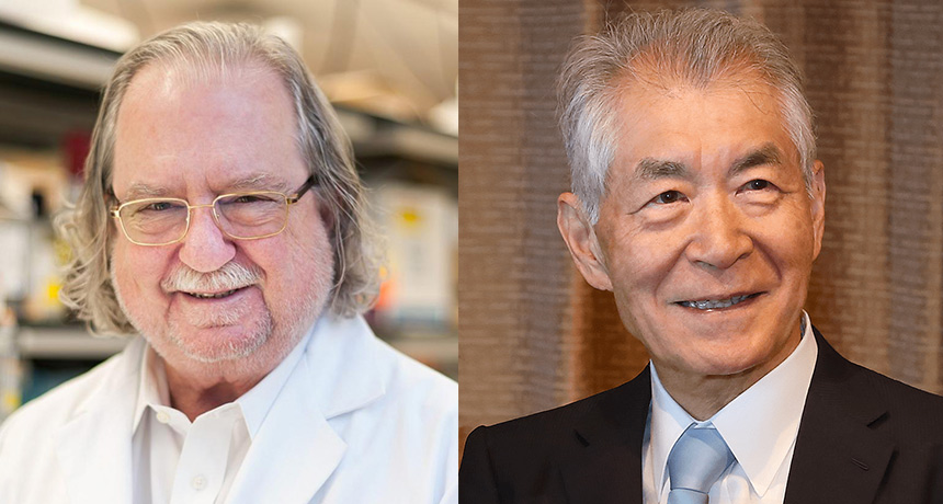 Nobel Prize recognizes the significance of cancer immunotherapy