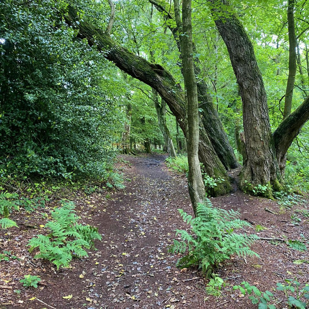 Adel Nature Reserve Footpath