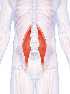 Diagram showing the Psoas Muscle