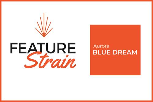 Blue Dream Strain