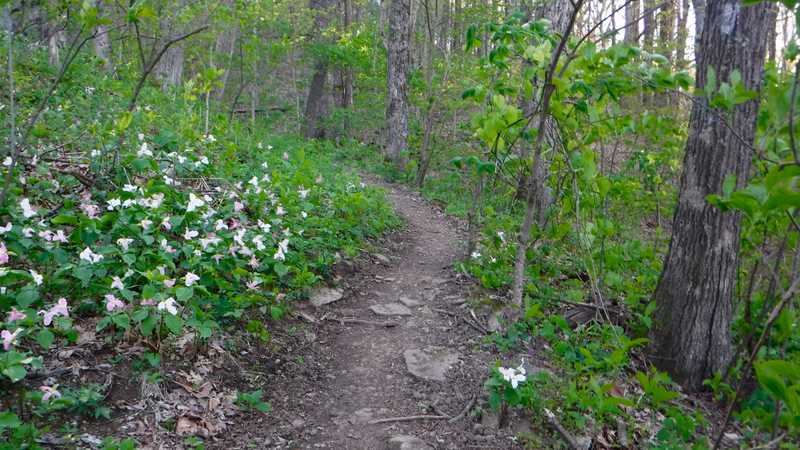 Trail with trillium