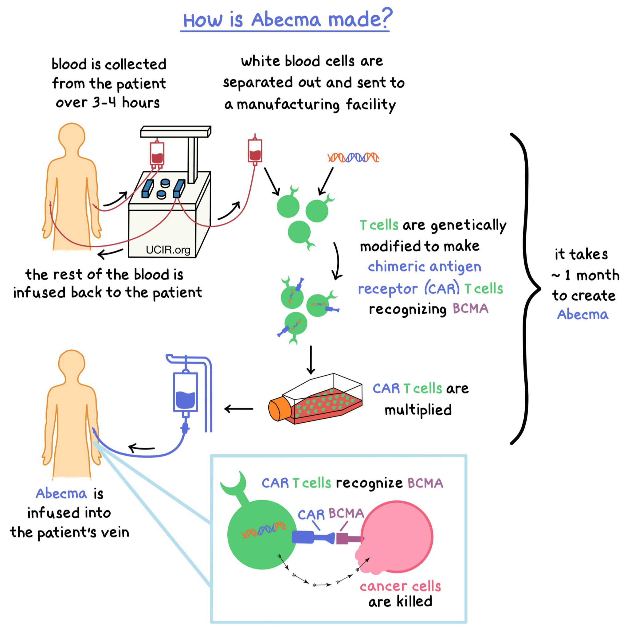 Illustration showing how is Abecma made