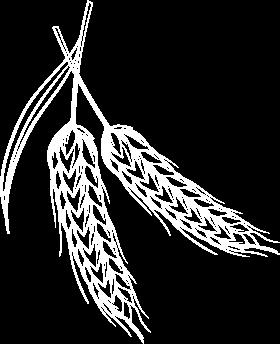 grain drawing
