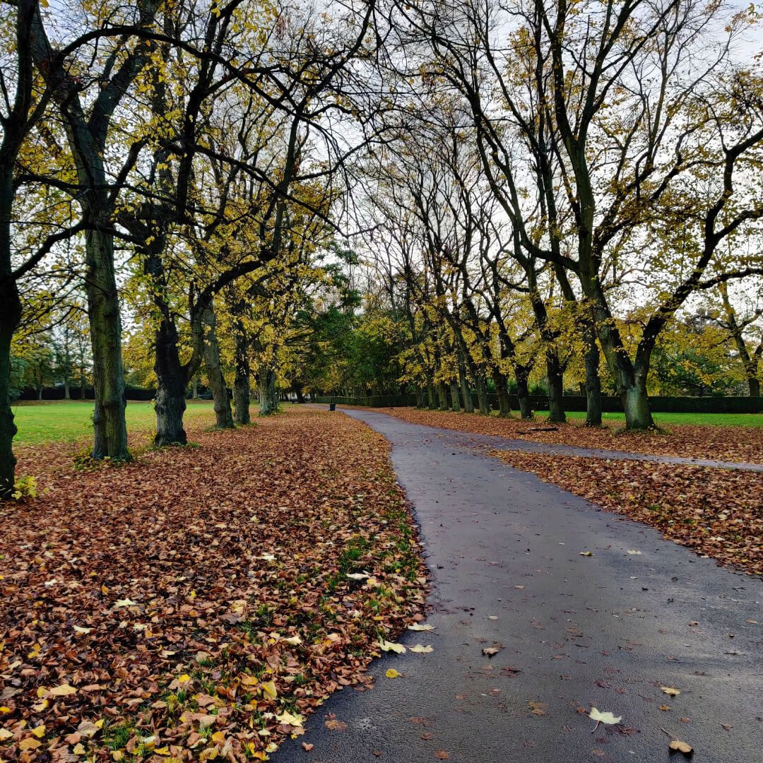 Woodhouse Moor/Hype leafy path