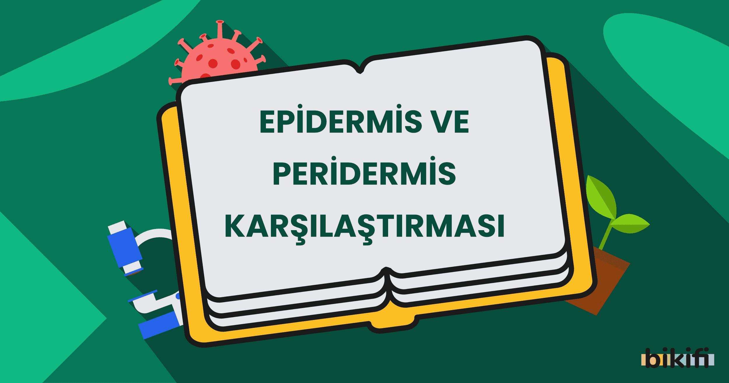 Epidermis ve Peridermis Karşılaştırması
