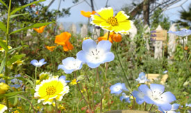 wild flowers growning outside the edne project