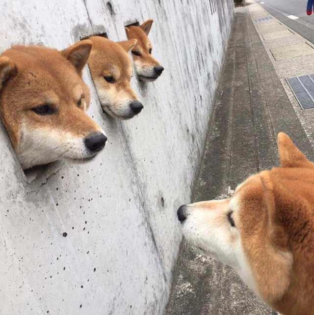 Hemnlo Doge