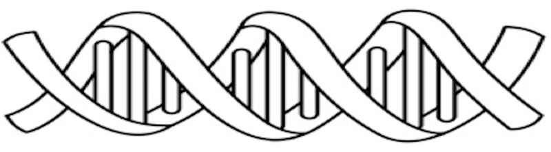 Who Am I Dna