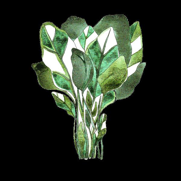 vegetable 4