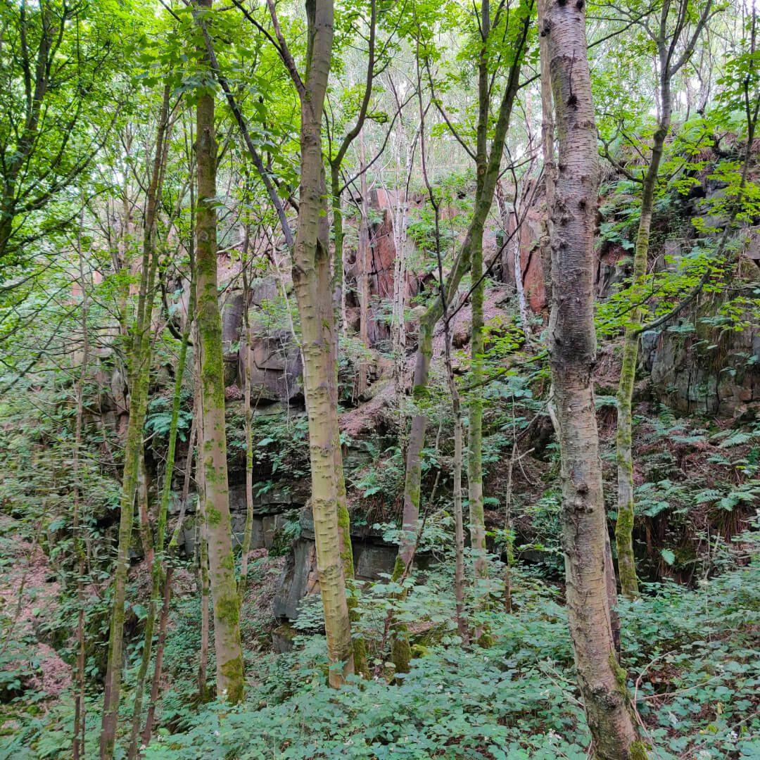 Calverley Wood path under Quarry