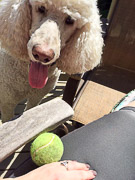 Any question how long he has been staring at this tennis ball? Doggy persistence.  2016