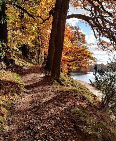 Autumn path through woods at Roundhay Park