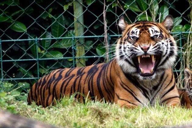 Chauffeur Me Tour Location - Dublin Zoo