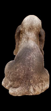 Cocker Spaniel photo