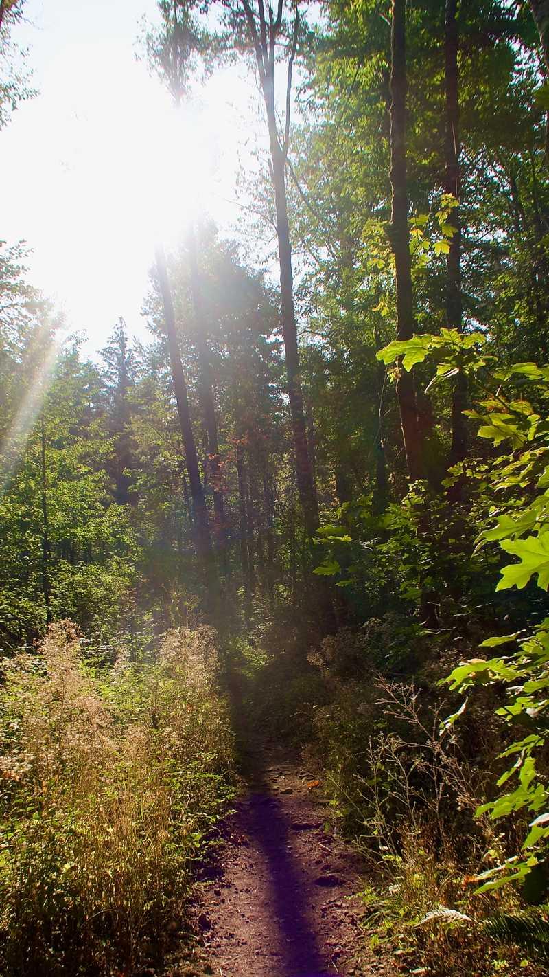 A gradual climb as the trail leaves Cascade Locks