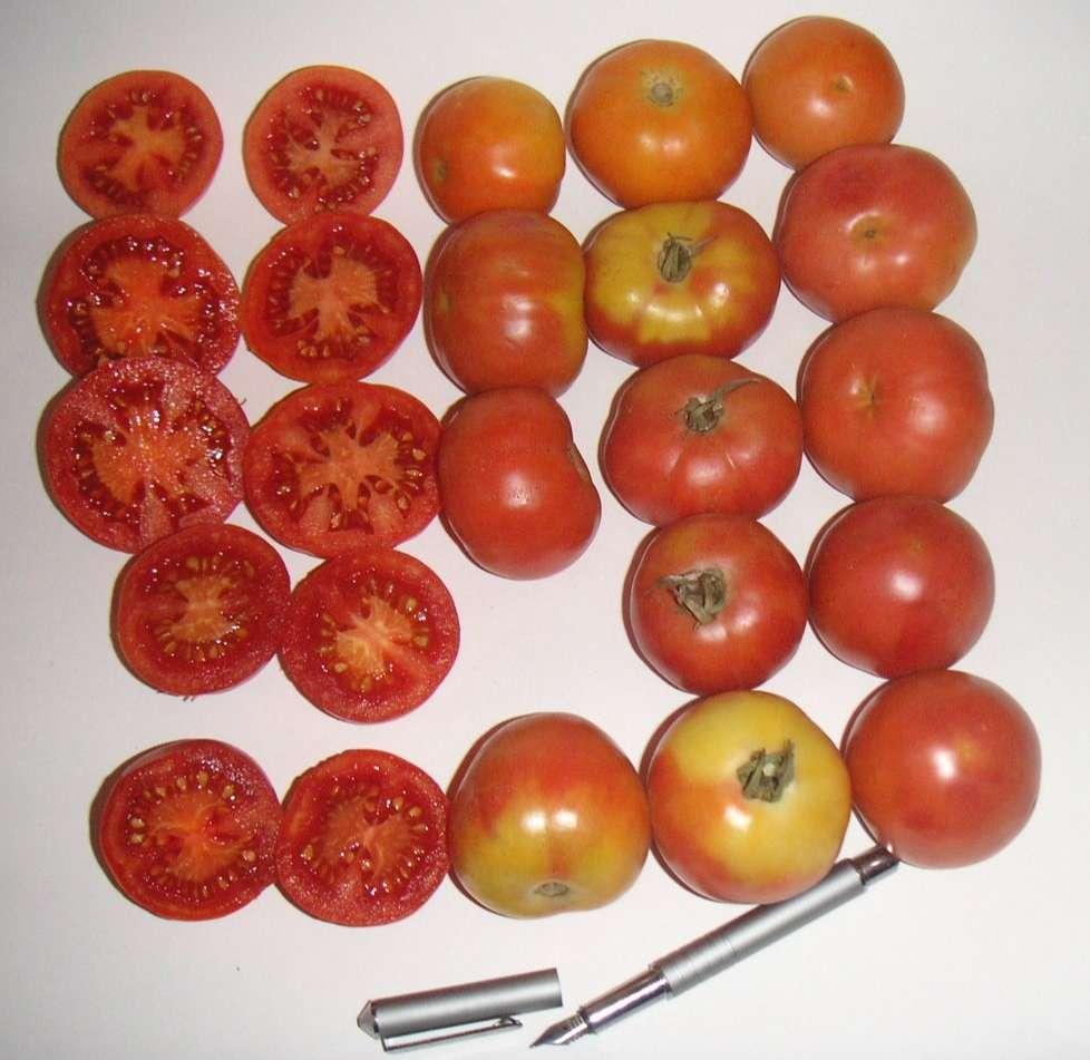 tomacons de l'anoia