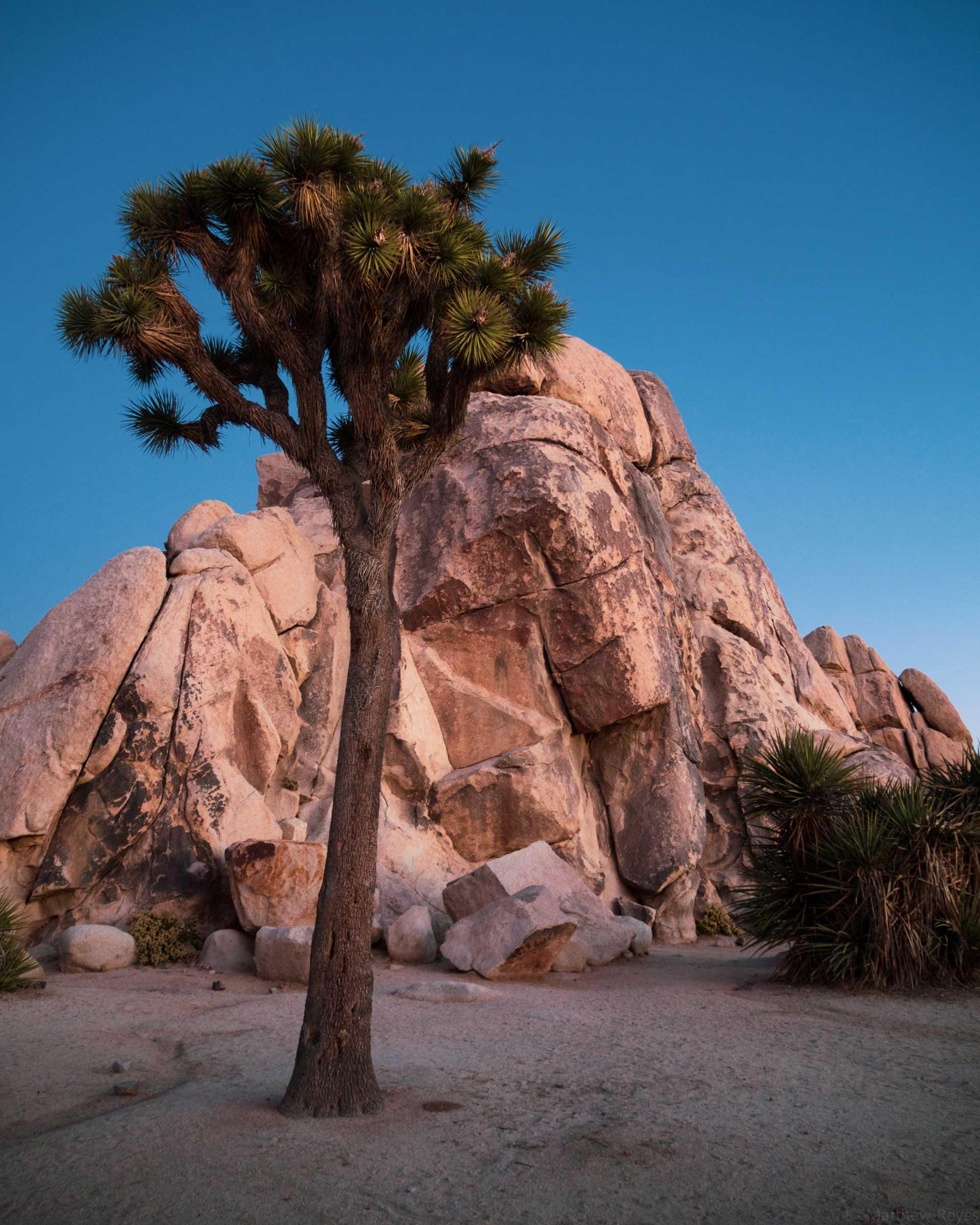 Joshua_Tree_Climbing.jpg