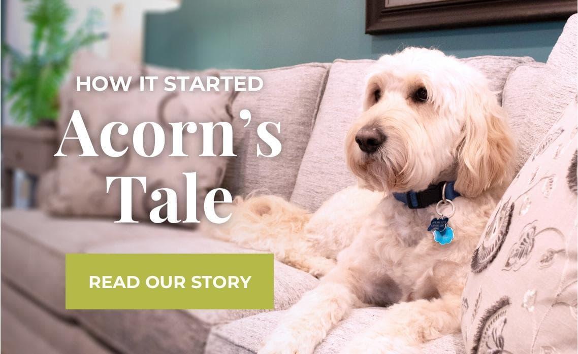 acorn banner tale