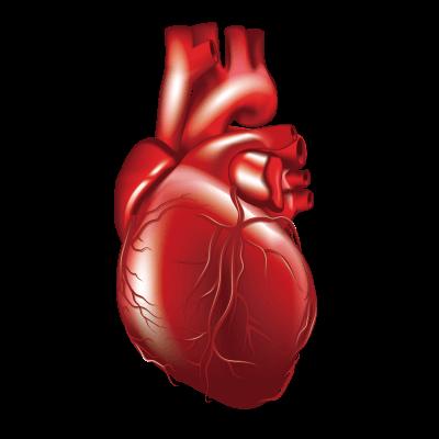 Diabetes Heart Care