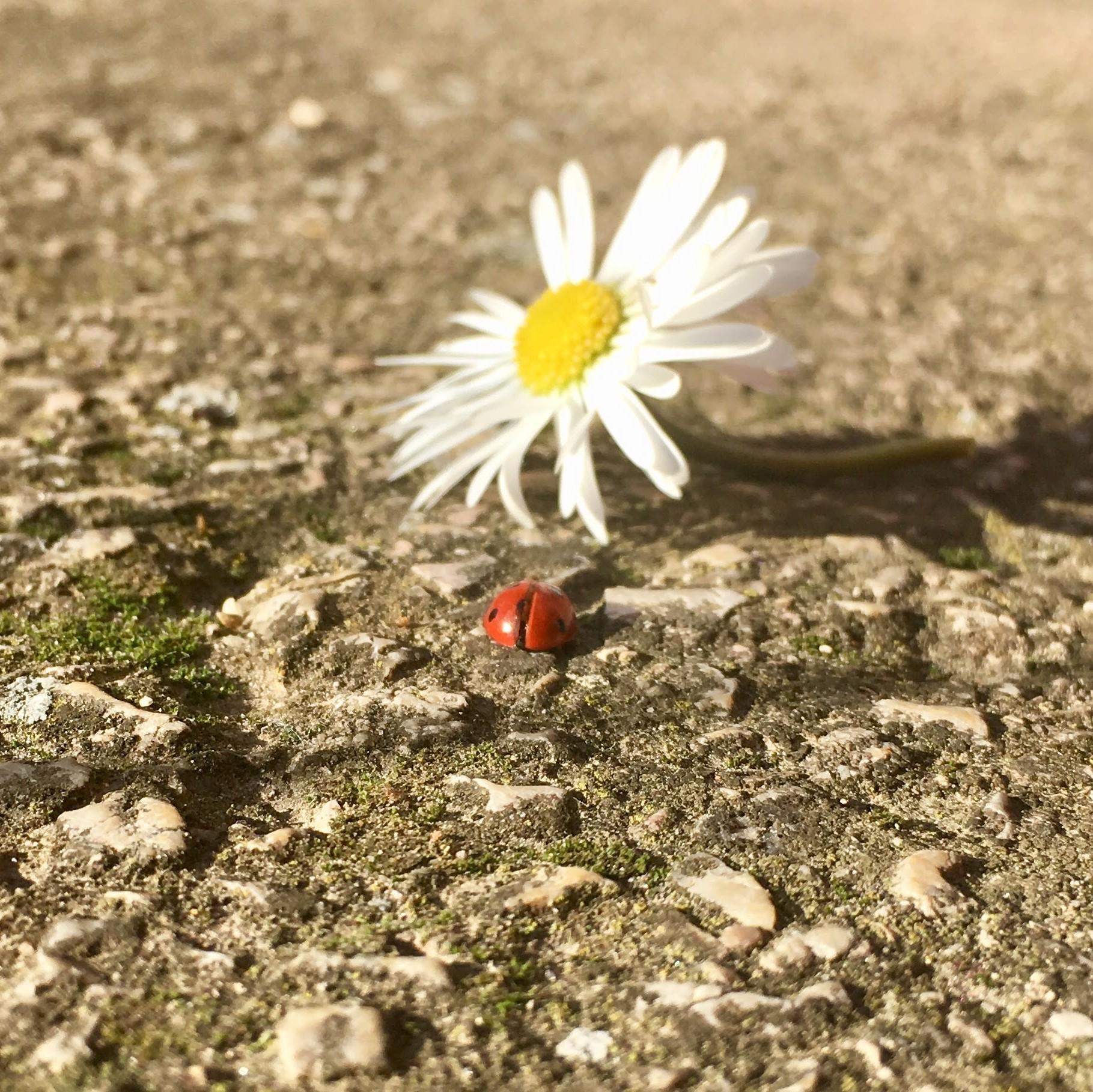 ladybug with flower