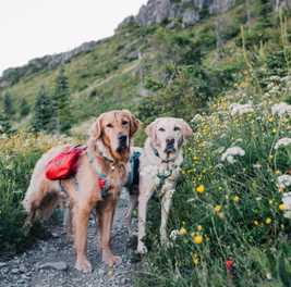 Dog-Friendly Hikes: Idaho