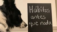 Nina viendo un cartel que dice, escrito con gis: 'Hábitos, antes que nada'.