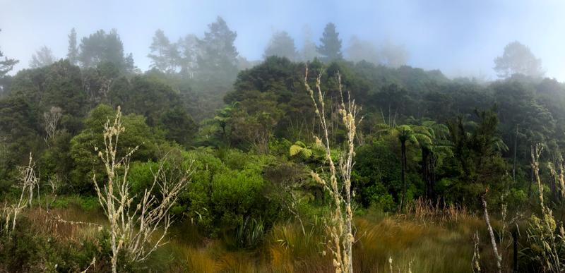 The fog begins to clear over a mossy forest