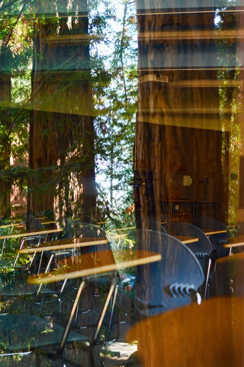 Redwood trees reflected in a classroom window