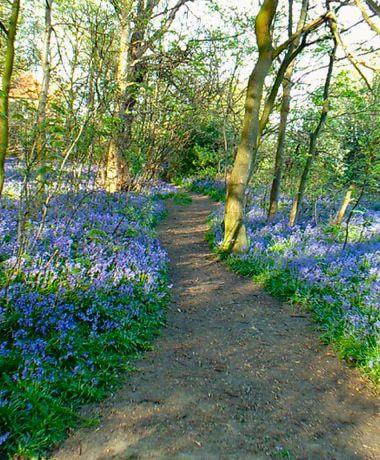 Gipton Wood