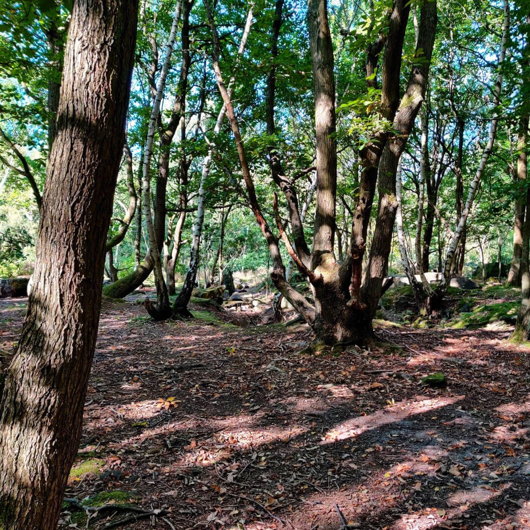 Hawksworth Wood path through woods