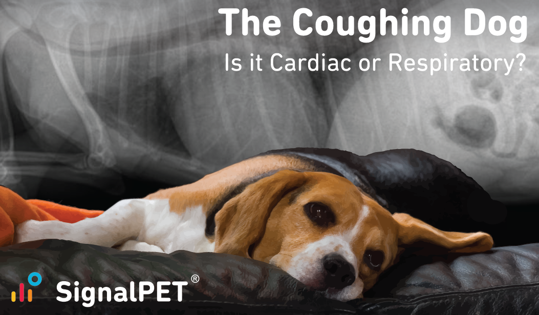 The Coughing Dog, Radiology and Resporatory Assessments Webinar