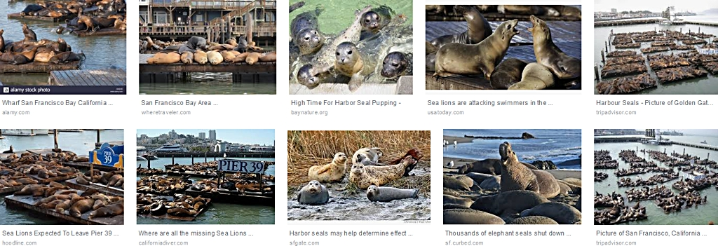 San_Francisco_Seals