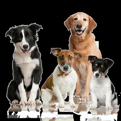 Cachorros variados